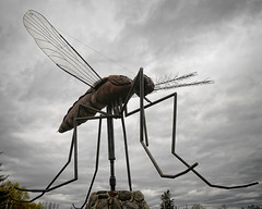 Giant mosquito (Susan - Have camera ... will travel!) Tags: sculpture statue giant nikon manitoba mosquito roadsideattractions scavengerhunt d300 komarno