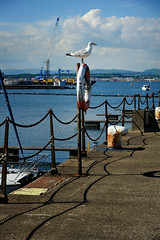 700_8871.jpg (photopath) Tags: sunshine southqueensferry portedgar