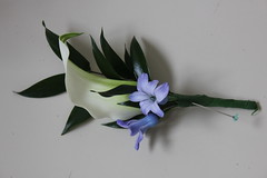 Button hole / corsage - Calla lily and hyacinths (Unique Wedding Flowers & Chair Covers) Tags: flowers wedding england white west court bride hall photo purple calla dale unique south sheffield yorkshire emma lilly florist wakefield brides bridal corsage buttonhole walton osborne hyacinth weddingflowers huddersfield barnsley florists burntwood darton weddingflower bagden emmaosborne uniqueweddingflowers