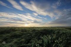 La Vague (photosenvrac) Tags: photo champs culture ciel nuage beauce ble orge cereale thierryduchamp