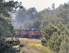 Slogging upgrade through the Ponderosa Pine forest, BNSF on the Arizona Divide at Riordan, west of Flagstaff, June 26, 2013 (Ivan S. Abrams) Tags: arizona santafe train railway trains freighttrains railways bnsf generalelectric freighttrain ponderosapines es44 arizonadivide ivansabrams ivansafyanabrams