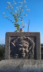 Flower Pot (Imagery By Antonio) Tags: ohio flower hospital cincinnati pot vase childrens avondale manor vernon gumm gumm238