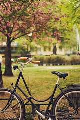 Have a great weekend! (nina's clicks) Tags: plaza flowers tree green bike bicycle square arboles stockholm bicicleta