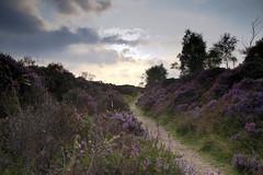 Purple Hathersage (D/\ZZ/\) Tags: trees sky plant clouds dof purple heather horizon under line growth 7d pathway