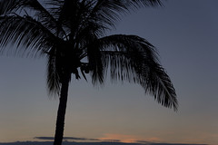 Baja California (VII) (larnal_kth) Tags: sky sun leave beach leaves sunrise dark mexico hojas grande cabo holidays coconut large sombra playa palm arena amanecer coco cielo palmtree shade gradient bajacalifornia cape baja silueta incredible coconuts palmera vacaciones cocos cabos shilouette loscabos oscuro mejico increible gradiente sandsol larnal luismartinezarnal
