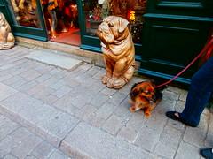tybee et les chiens de guerande (jeanpierrerene49) Tags: xxxxxxxx