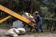 Tea Factory - Cameron Highlands (scuba_dooba) Tags: cameron highlands hill station malaysia scan scanner plustek tea plantation process factory malaya se asia sea reel10 opticfilm 7600i 7200dpi wolf faust vuescan kodak ektachrome 200 nikon fe