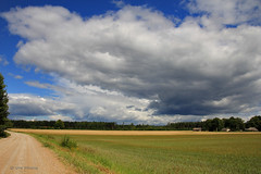 Summertime serenity (Una S) Tags: road summer field yellow clouds countryside day country latvia crops gravel latvija rujiena vidzeme
