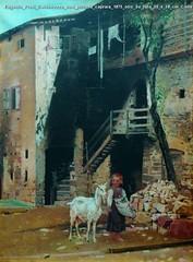 Eugenio Prati Caldonazzo con piccola capraia 1875 olio su tela 55 x 38 cm Collezione privata