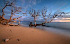 Sundown, Maui, Hawaii (Darcey Prout) Tags: ocean blue sunset sea usa tree beach hawaii us day cloudy maui hdr olowalu d800 mygearandme mygearandmepremium mygearandmebronze mygearandmesilver mygearandmegold mygearandmeplatinum mygearandmediamond