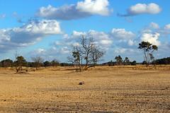 Loonse en Drunense duinen (ToJoLa) Tags: winter tree nature clouds canon landscape bomen sand natuur wolken explore duinen landschap zand wandeling noordbrabant 2014 loonseendrunenseduinen nationaalpark ontrack nationaalparkloonseendrunenseduinen