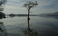 Loch Lomond (b13bhm) Tags: reflection lochlomond 6d ef1740mm lochlomondandthetrossachsnationalpark millarochybay millarochytree