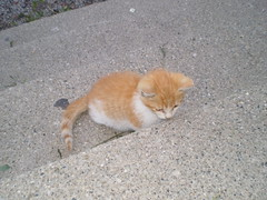 Jack (universalcatfanatic) Tags: orange cats white stone stairs cat out jack concrete outside grey kitten stair sitting stones tabby side gray cement steps neighborhood step sit stray neighbourhood