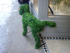 Green dog has wee on York shop doorway (Tony Worrall Foto) Tags: county street york uk england sculpture dog holiday green pee grass shop fun bush model funny tour place puppet yorkshire country north visit tourist historic wee quirky grown yorks dogwee 2014tonyworrall