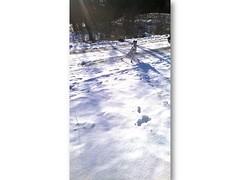 Folie10 (sabinekronenberger.com) Tags: schnee winter ast hessen frankfurt bad hauptbahnhof hund baum blauerhimmel hochsitz weiser hinterland hartenrod endbach stahlblauer
