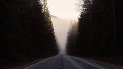 Any Road Will Get You There (John Westrock) Tags: road trees fog foggy pacificnorthwest nature outdoors canoneos5dmarkiii canon135mmf2lusm johnwestrock morning pwlandscape washington wallpaper background