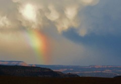 Rainbow with ALL THE COLORS in Utah (Alexandrea.F) Tags: trees sky sun clouds photography rainbow rainyday blueskies clearsky brightblue clearskies noclouds