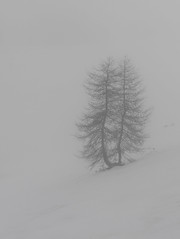 Belle Plagne (happy.apple) Tags: winter snow france tree fog geotagged skiing savoyalps rhnealpes europeanlarch belleplagne mcotlaplagne skiing2015