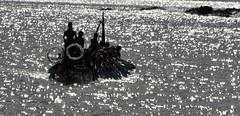 On attack (MJField) Tags: newzealand canoe maori waitangi waka
