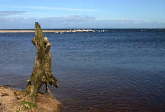 The log points but to where (RobK5) Tags: beach water coast scotland seaside ayrshire doonfoot