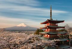 The Harmony of Japan (blame_the_monkey) Tags: travel japan architecture sunrise landscape japanese pagoda spring shrine asia fuji sakura cherryblossoms hanami mtfuji d800 fujiyoshida 2japan 0portfolio 0landscapesandatmosphere 0portfolioexpanded 0historicalcitiesandworldheritagesites 0historicalcitiesandworld 1seasiachinajapan