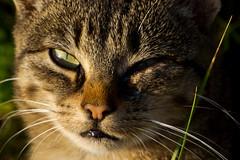IMG_6034 (Lightcatcher66) Tags: florafauna makros katzencats lightcatcher66