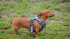 16-05-15_untitled_712 (Daniel.Lange) Tags: dog philadelphia dogs dogdayafternoon spado columbussquarepark
