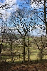 Calver 043 (Slimboy Fat) Tags: derwentvalley calver derbyshire england uk