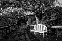unwawering (Farhat M) Tags: clouds canon bench landscape blackwhite nationalpark bush path perspective australia melbourne walkway vista dandenongranges 1635mm winterssun skyhighdandenong