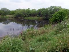 pond #1_Blood Pits_50638 (San Marcos Greenbelt Alliance) Tags: flowercloseups ringtailridge sanmarcosgreenbeltalliance smgaphotobylancejones