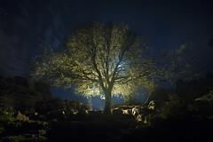 MAGIC SLEEPS HERE (Der_Golem_) Tags: arbol cielo nocturna solitario antequera eltorcal 2016 linterna largaexposicion viaverde elniodelasluces