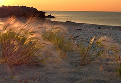 Good Morning Sunshine (Ken Mattison) Tags: morning light orange sun sunlight lake plant color colour beach water yellow wisconsin landscape gold dawn sand flora outdoor perspective lakemichigan milwaukee backlit panasoniclumix fz1000