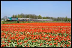 NMBS-2803+9240_Ssh_06052016 (Dennis Koster) Tags: ns bollen trein tulpen traxx nsr warmond nmbs br186 personentrein passagierstrein 9240asdbrusz