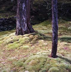 Moss garden (Mark Dries) Tags: japan planar 80mm ektar carlzeiss 100iso hasselblad500cm markguitarphoto markdries