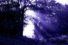 2016-05-13 Secret wood (52)purple light door (april-mo) Tags: wood light mist purple lumire bois purplelight