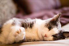 Syrsan-1 (fittbodaguttir) Tags: katt portrtt djurportrtt syrsan