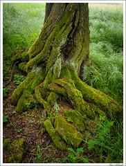20160526-057_Verschiedenes.jpg (schmilar77) Tags: jahreszeit natur pflanzen landschaft wald baum frhling baumstamm bildbeschreibung
