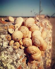 Caracoles_al_Sol (frun2/Carlos Calvo) Tags: sky sun house macro field rock dof snails foreground