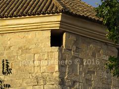 IMG_9789 marca (Josema Armero) Tags: lucena cerncalo castillodelmoral