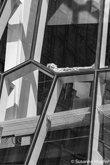 Chillin' (cybersooz) Tags: people bw iceland reykjavik 2016 harpa harpaconcerthall
