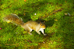 Lets play (ikea369) Tags: grass animals squirel