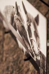 0005  Blue Ivy Portraiture 2848 x 4288 (BlueIvyPortraits) Tags: blue light horses people blackandwhite cats pets dogs senior beautiful wisconsin portraits photography engagement photographer salvationarmy natural photos good models couples lifestyle ivy professional portraiture boudoir weddings volunteer ages sanctuary kiel seniors equine fivestar amazinggrace chilton alivia howardsgrove elkhartlake houdek newholstein calumetcounty headphotographer