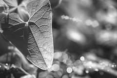Confused what I thought with something I felt (_.Yann 07 ._) Tags: bokeh light contrast dof depthoffield mood grey shades nikkor nikon d750 5502000mmf4056 curuyann europe france ardche peaceful photoshop