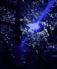 (Photosintheattic (Devy)) Tags: yard garden blues nightlite solarlight outdoorlight