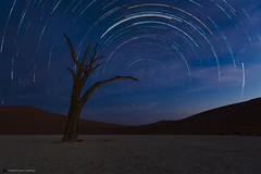 Dead Camelthorn Trees against blue night sky in Deadvlei, Sossusvlei. Namib-Naukluft National Park, Namibia, Africa. (daniel.osterkamp) Tags: desert namibia stars africa african arid blue camelthorn clay dead deadvlei dry dune famous hot landscape namib namibnaukluft namibnaukluftnationalpark namibian national nationalpark natural nature naukluft night orange outdoor pan park red sand scenery sight sky sossusvlei startrails tourism trails travel tree vlei white wild