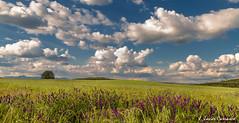 June landscape (AvideCai) Tags: paisaje cielo nubes tierras sigma1020 avidecai