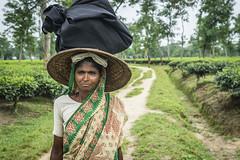 Srimangal-6138 (BohemianTraveler) Tags: asia tea bangladesh srimangal srimongol sreemangal