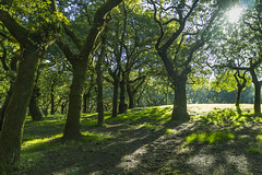 Sometimes one can't see the wood for the trees. (dorablancoheras) Tags: tree rbol verde green light luz sun sol verano summer bosque forest paseo walking relax santiagodecompostela galicia dog perro outdoor