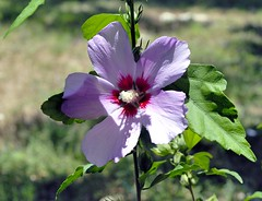 _DSC0069e ~ Pleasant Purple (BDC Photography) Tags: pipecreek texas usa nikon nikond200 flowers purple tamronda09bayonetlenshood nikon67mmcircularpolarizeriifilter tamronaf1750mmf28xrdiiildasphericaliflens