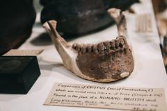 QF4C7791 (leslilundgren) Tags: teeth jawbone pittriversmuseum